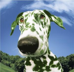 green dog 3